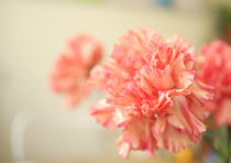 Pink flowers by Tereza Visinka