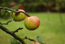 Apples on the tree by Tereza Visinka