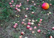 Apples by Tereza Visinka