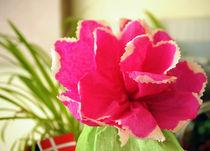 Danish flower by Tereza Visinka