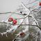 Frozen-01-s-bruett