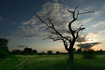 death tree von Stefan Bruett
