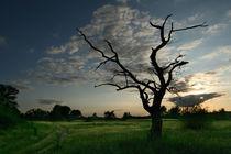 Death-tree