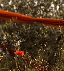Orange Net and Flower by Casey Marvins