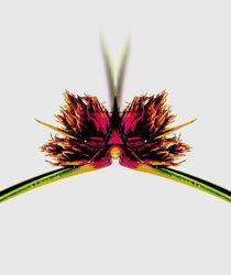 Flora mal zwei by Susanne Brutscher