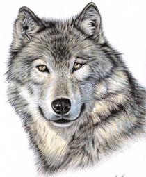 Der Wolf von Nicole Zeug