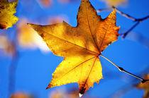 Autumnbelow
