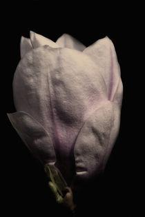 Magnolia / 3 von Heidi Bollich