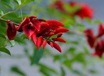 Rote Baumblüten