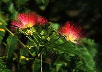 Blütenfeuerwerk