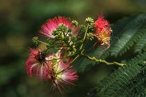 Blütenfeuerwerk II