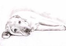 Liegender Labrador by Nicole Zeug
