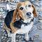 Beagle-nanni-gross-os