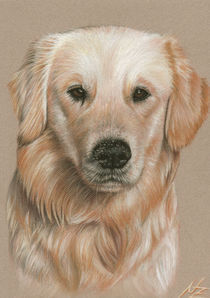 Golden Retriever Sandnase by Nicole Zeug
