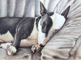 03-06minibulldog