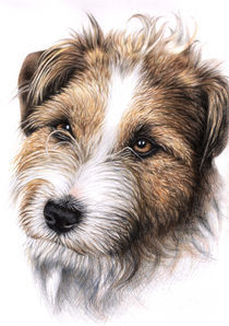 Jack Russell Terrier Portrait von Nicole Zeug