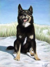 Schäferhund - German Shepherd von Nicole Zeug