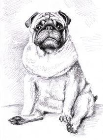 Mops - Pug Portrait von Nicole Zeug