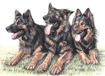 Langhaar Schäferhunde von Nicole Zeug