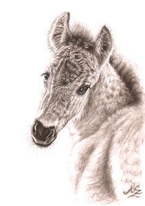Wildpferd Fohlen - Wild Horse Foal by Nicole Zeug