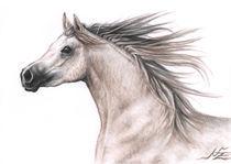 Araber Hengst - Arabian Stallion von Nicole Zeug