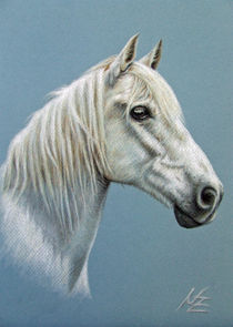 Schimmel - White Stallion by Nicole Zeug