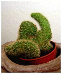 Cactus von Pinar Öz