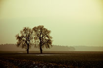 Herbstbaum by Michael Krause