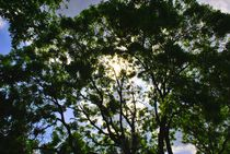 Summer Tree von iulia-spin