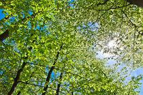 Green Foliage by rawcaptured
