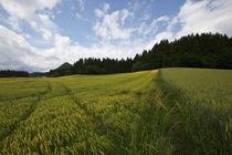 Schiefling-hintere-felder-10-06-1753