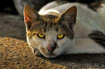 Stray Cat by Nawal Khouildi