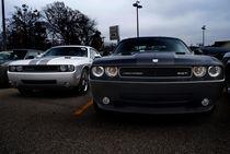 Dodge Challengers von Daniel Kemmer