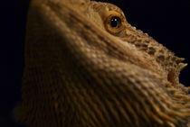 Lizard Face von Annissa Melendez