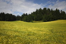 Schiefling-hintere-felder-10-06-17142