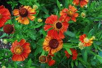 Rote Blumen von Thomas Peter