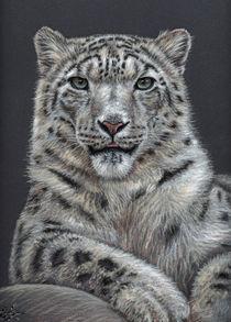 Snow Leopard - Schneeleopard by Nicole Zeug