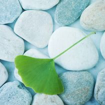 stones and a gingko leaf by Priska  Wettstein