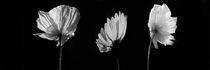 Blütenpanorama by Miloslava Habermehl