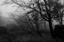 Herbstnebel von Miloslava Habermehl