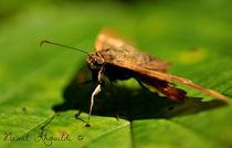 Moth by Nawal Khouildi