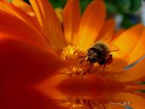 Chester Forest  Bee von Panda Broad