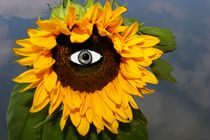 EYE OF THE SUN by photofiction