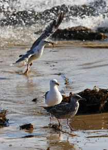 """Look What I Got!"" - Seagulls by Eye in Hand Gallery"
