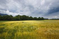 Ansicht Rosental,Felder Kärnten by Bryan Bennett