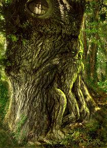Oak Father by Dan Goodfellow