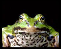 Frontal frog von Peter Hoetmer