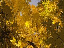 Gelb Herbst von iulia-spin