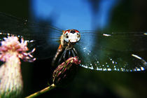 Dragonfly in the sky by Charlene Frozen In Time Photos