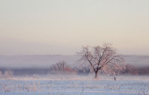 Winter tree by Daria Korotkova